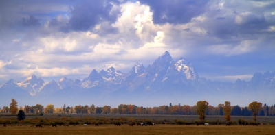 Horses Graze In Front Of The Grand Teton Cathedral Group At The Start Of Autumn