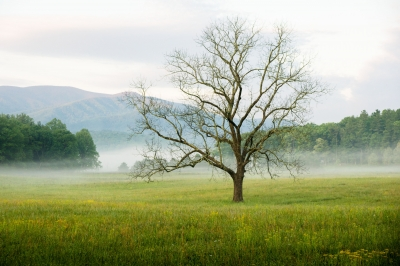 Cades Cove – Smoky Mountains National Park