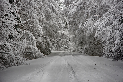 Winter Back Roads