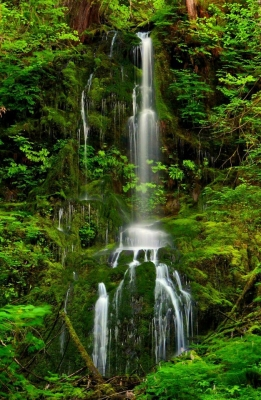 Quinault Rainforest