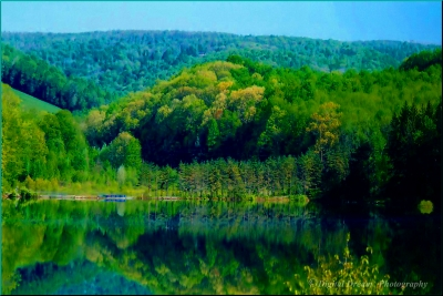 Reflection Of Green