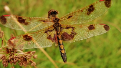 Dragonfly Rest