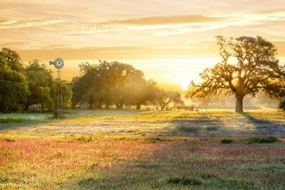 Morning Colors In South Texas