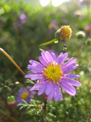 Little Purple And Yellow Flowers In The Sunlight