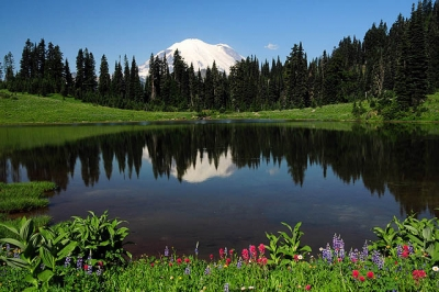 Morning At Tipsoo Lake