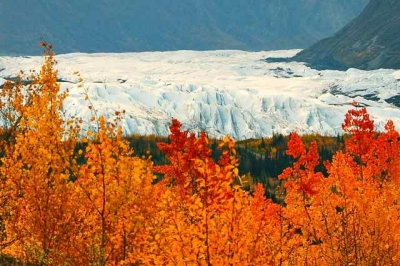 Autumn Leaves And Glacier Ice