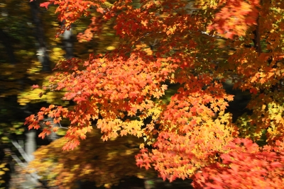 Flying Fall Color