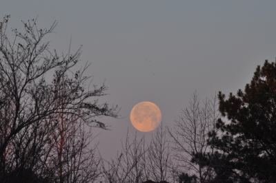 Moon Set In The Trees