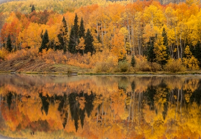 Riot Of Colors At Woods Lake Near Telluride