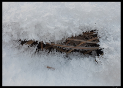 Frost Under The Snow