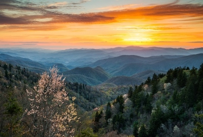 Great Smoky Mountains Landscape Photography Serviceberry Sunset