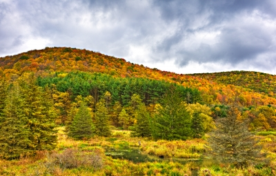 Tioga County-route 349 Foliage