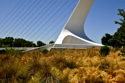Sundial Bridge & Grasses