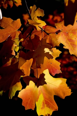 Leaves Of Fall