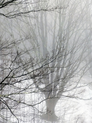 A Day Of Fog And Snow