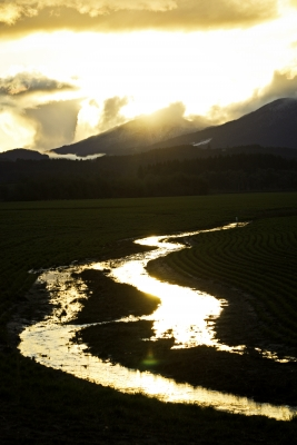 The Golden Hour In The Willamette Valley