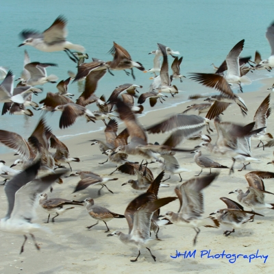 Commotion On The Beach