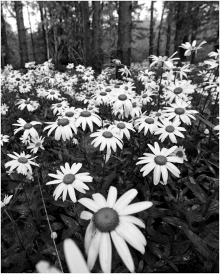 In The Land Of Daisies