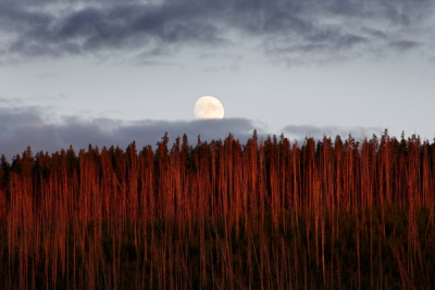 Moonrise Over Norris Geyser Basin