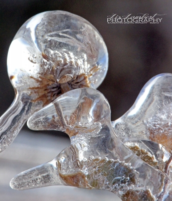 Abstract By Nature – Iced Beauty