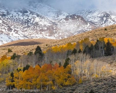Winter Coming On (june Lake Loop, Eastern Sierra)