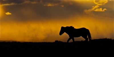Stallion At Sunset