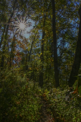 A Hint Of Fall Along Tennesse Rock Trail