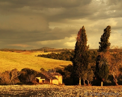Evening Light On The Road To Pienza
