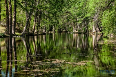Frio River Reflections