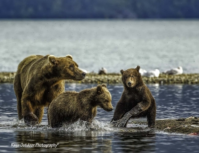 Sow And Her Two Cubs