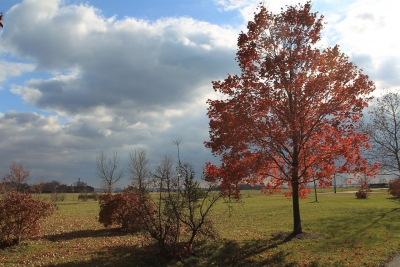 Final Traces Of Autumn