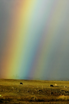 Giant Rainbow Over Parker Ranch