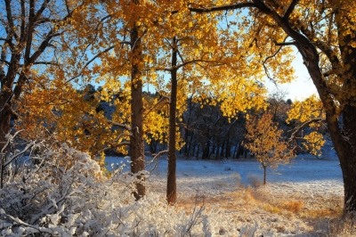 Ute Valley Fall Snow