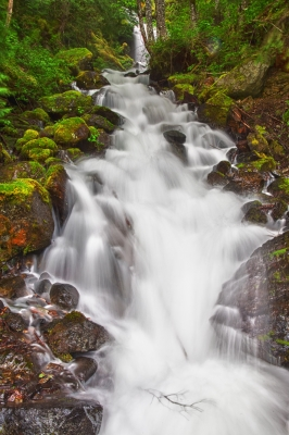 Washington, North Cascade National Park, Rainforest, Hdr