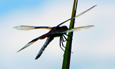 Dragonfly's Roost