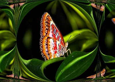 The Colors Of A Butterfly