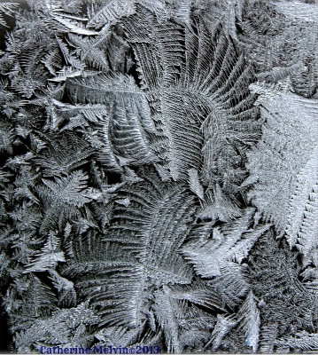 Winged Frost