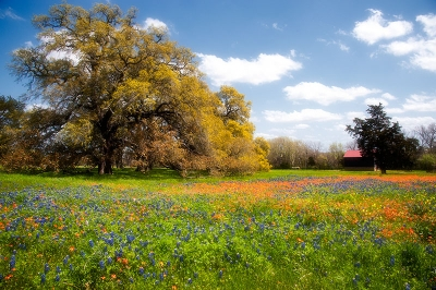 Wildflowers In The Pasture