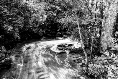 Indian Run Creek And Foliage B&w