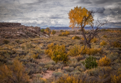 Autumn In The Desert