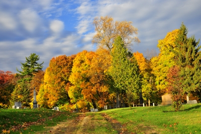 Fall Colors Of Albany Rural Cemetery