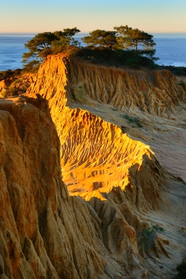 Torret Pines Sunrise