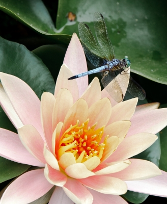 Flower With Dragonfly