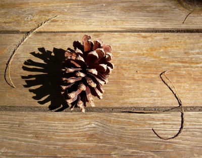 Pinecone On Wood
