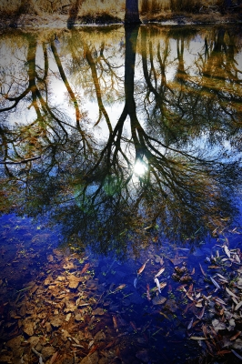 South Fork Reflections