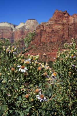 Fall Blooms In Zion National Park