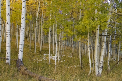 Deep In The Aspens
