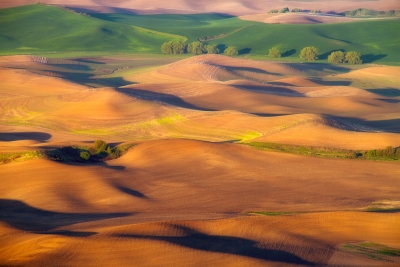 Golden Morning In The Palouse