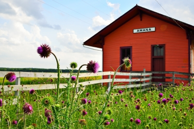 Thistles By Train Station