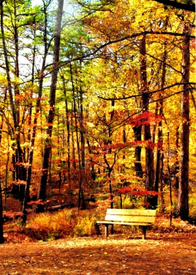 Autumn In Robber's Cave State Park
